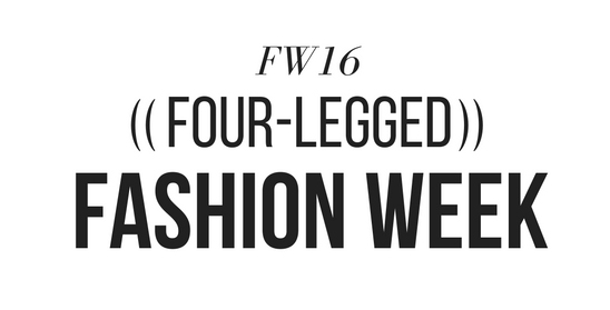 ((Four-Legged)) Fashion Week