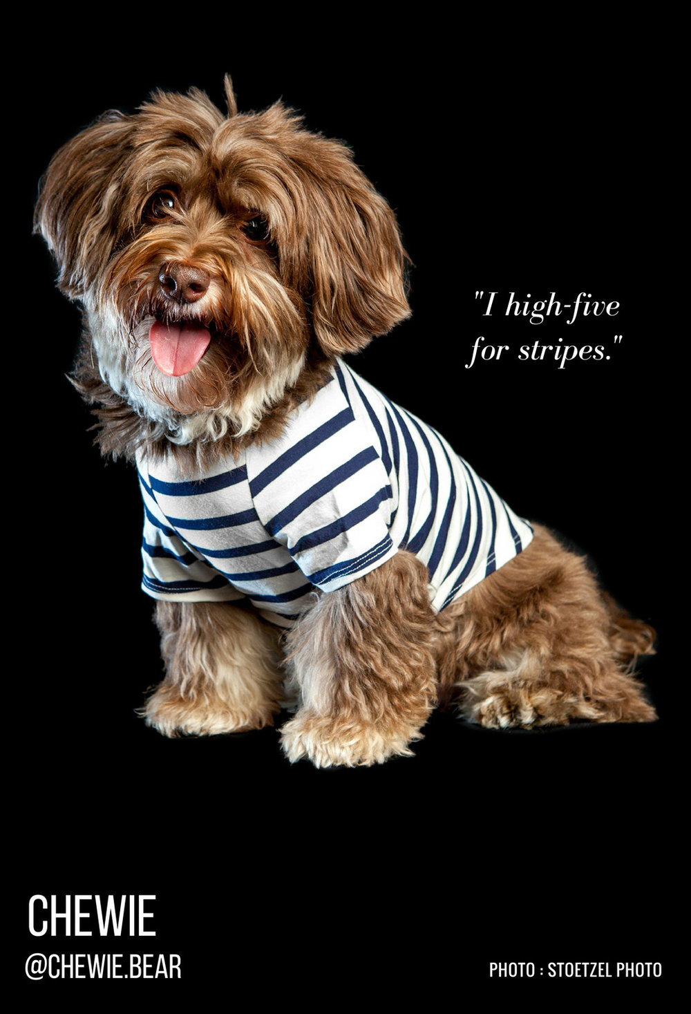 DOG & CO. | Perfect Stripe T