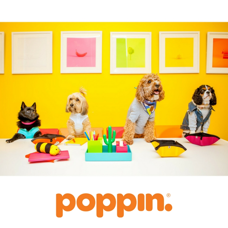 Pups of Poppin
