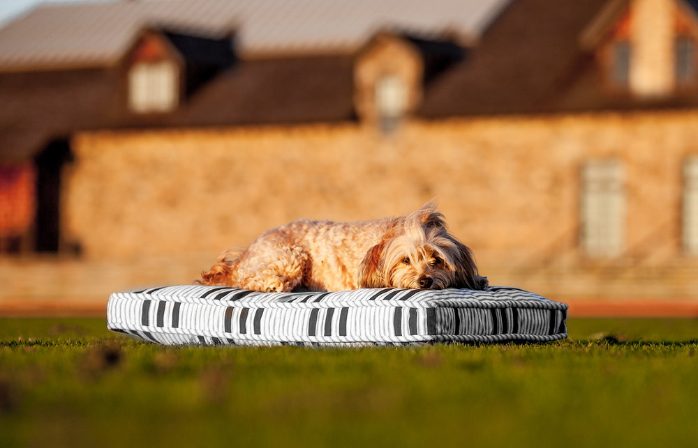 MR DOG | Stripe Mattress Bed (Available in-store)