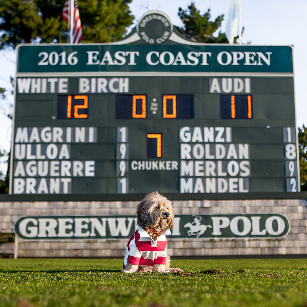 East Coast Open | Polo Cup | Greenwich Polo Club