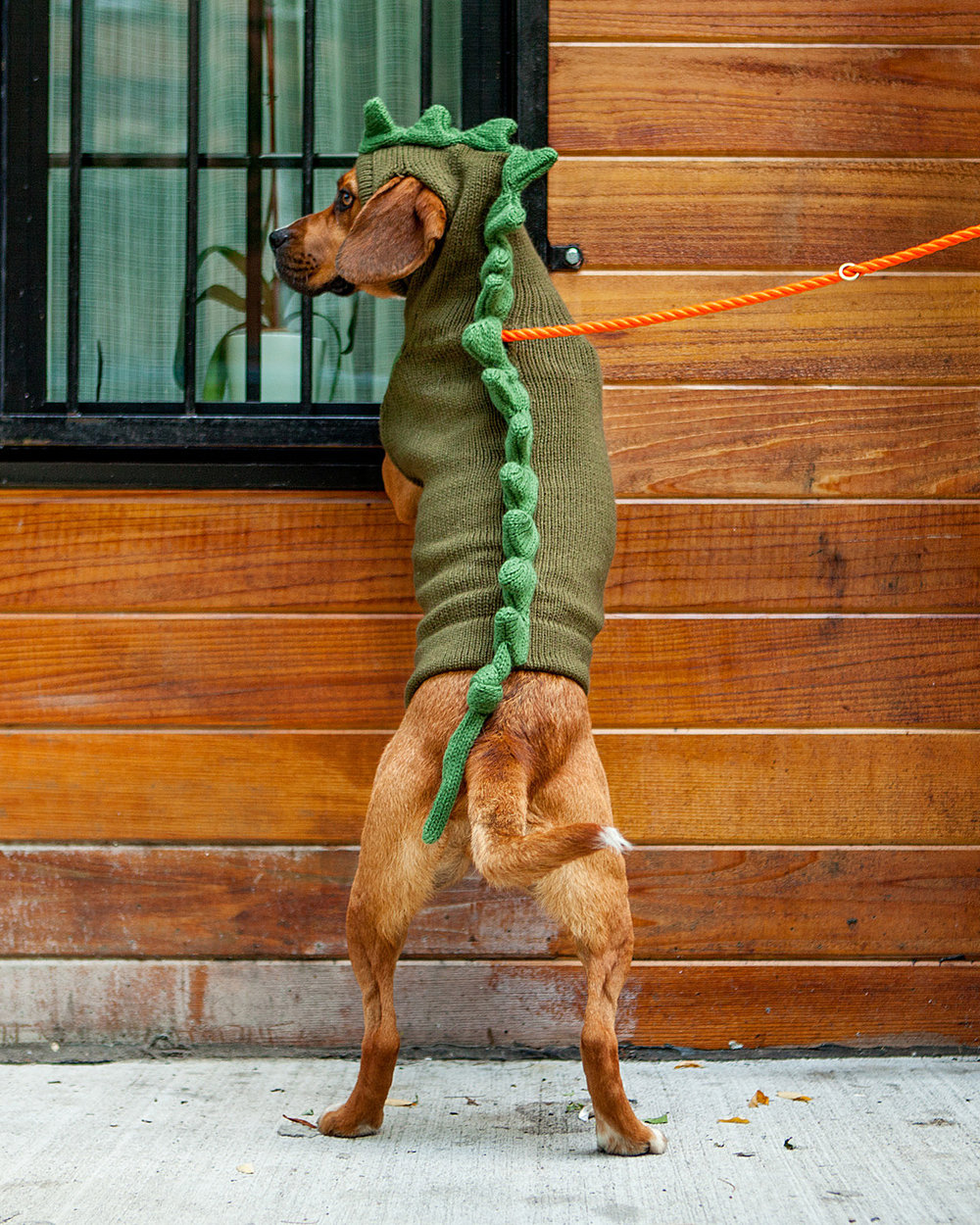 JUNE in the Dragon Dog Sweater  +  FOUND MY ANIMAL | Adjustable Rope Lead in Rescue Orange