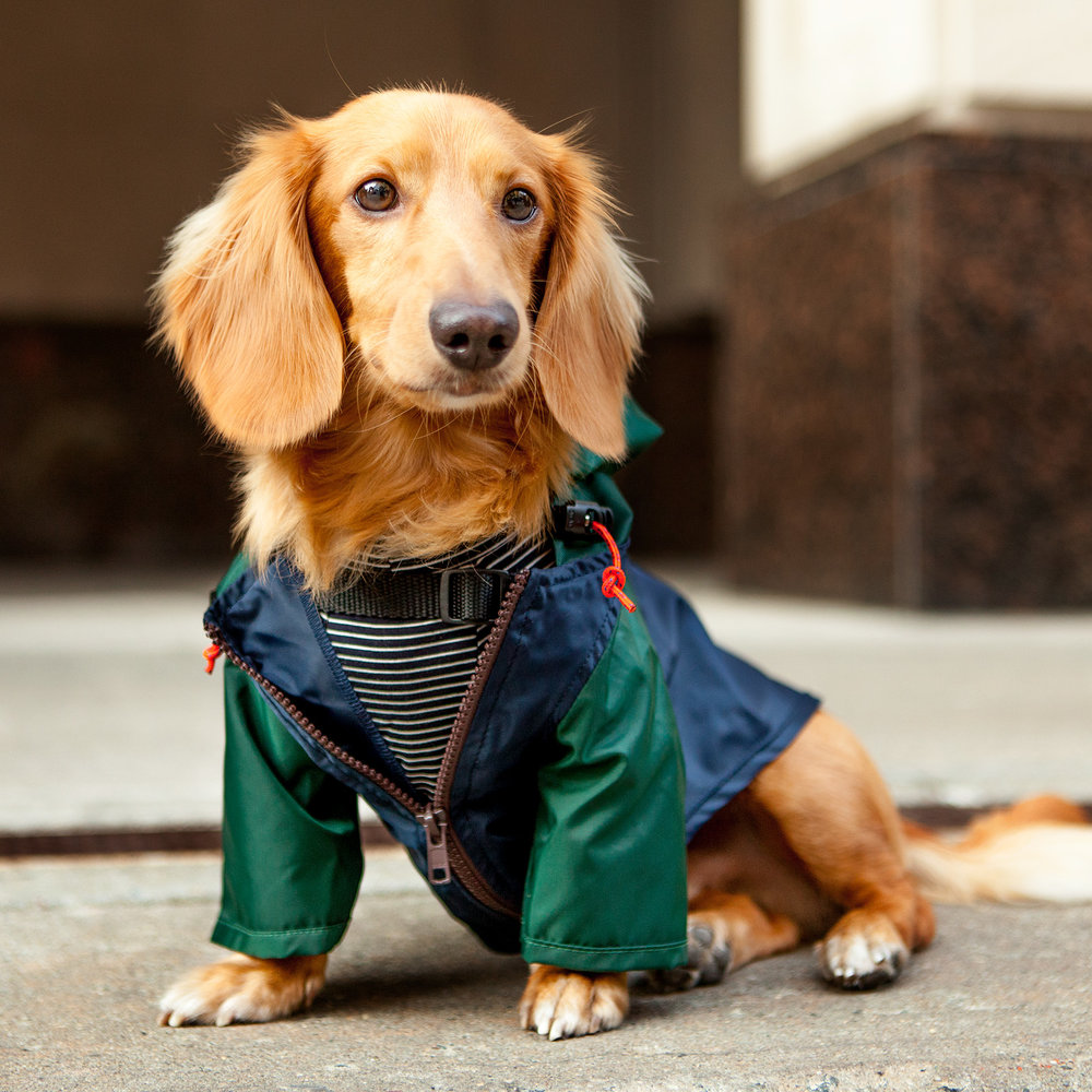 WAGWEAR | Rain Breaker in Colorblock (DOG & CO. Exclusive)