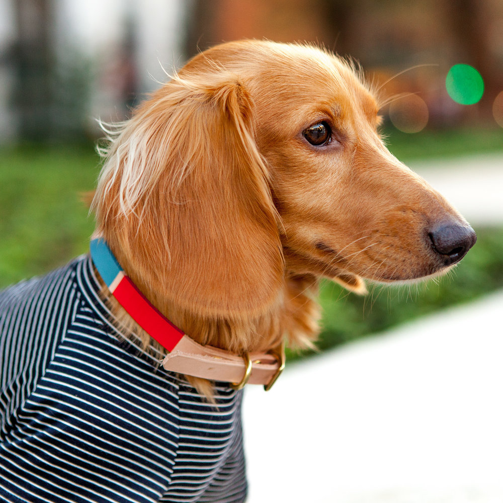SON of a SAILOR | Willis Colorblock Collar