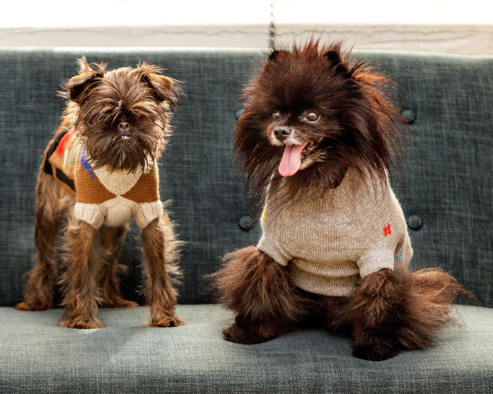 DUSEN DUSEN   Silhouettes Dog Sweater + RUBY RUFUS   Hashtag Cashmere Sweater