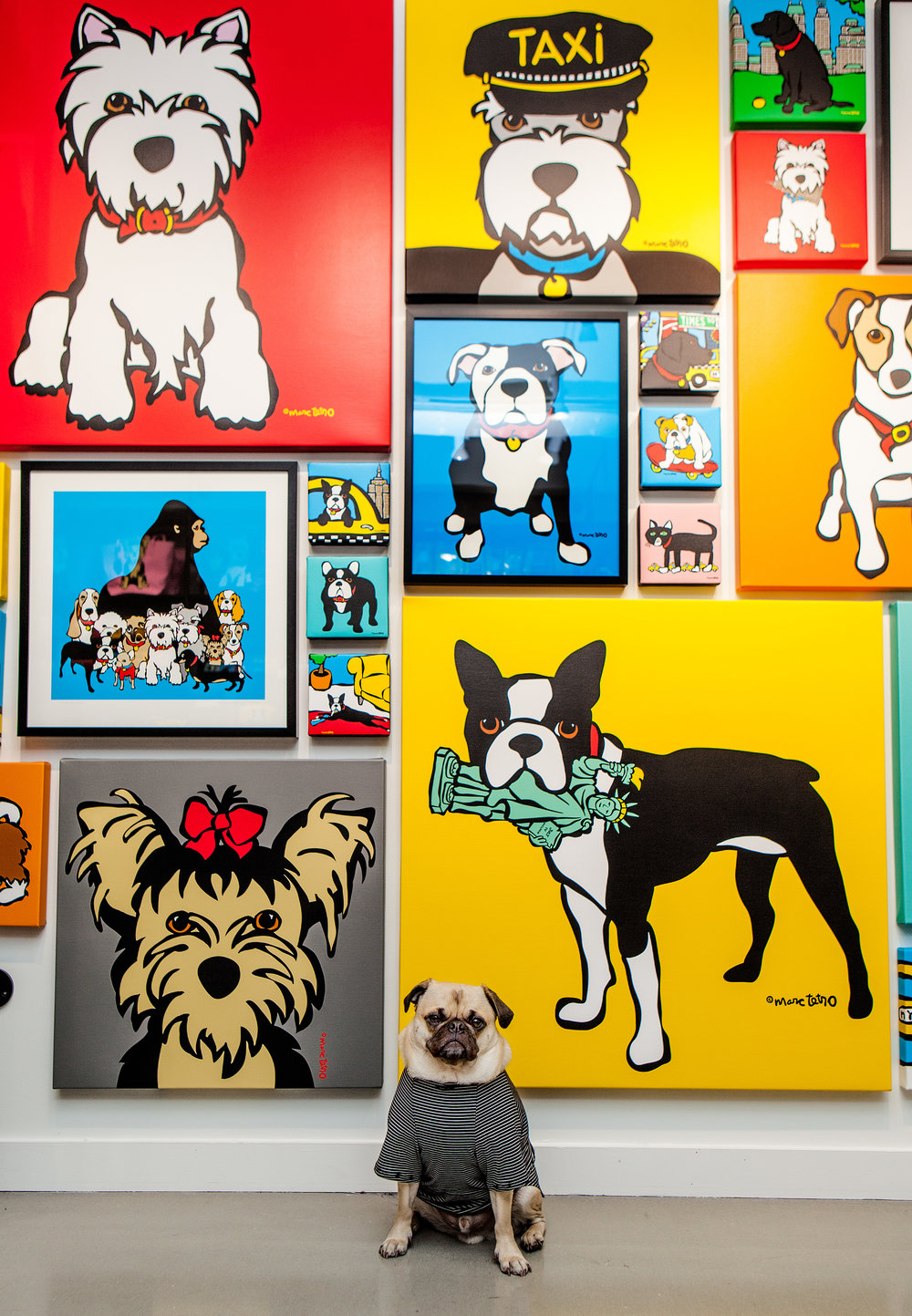 DOG & CO. | Perfect T in Black + White Stripe