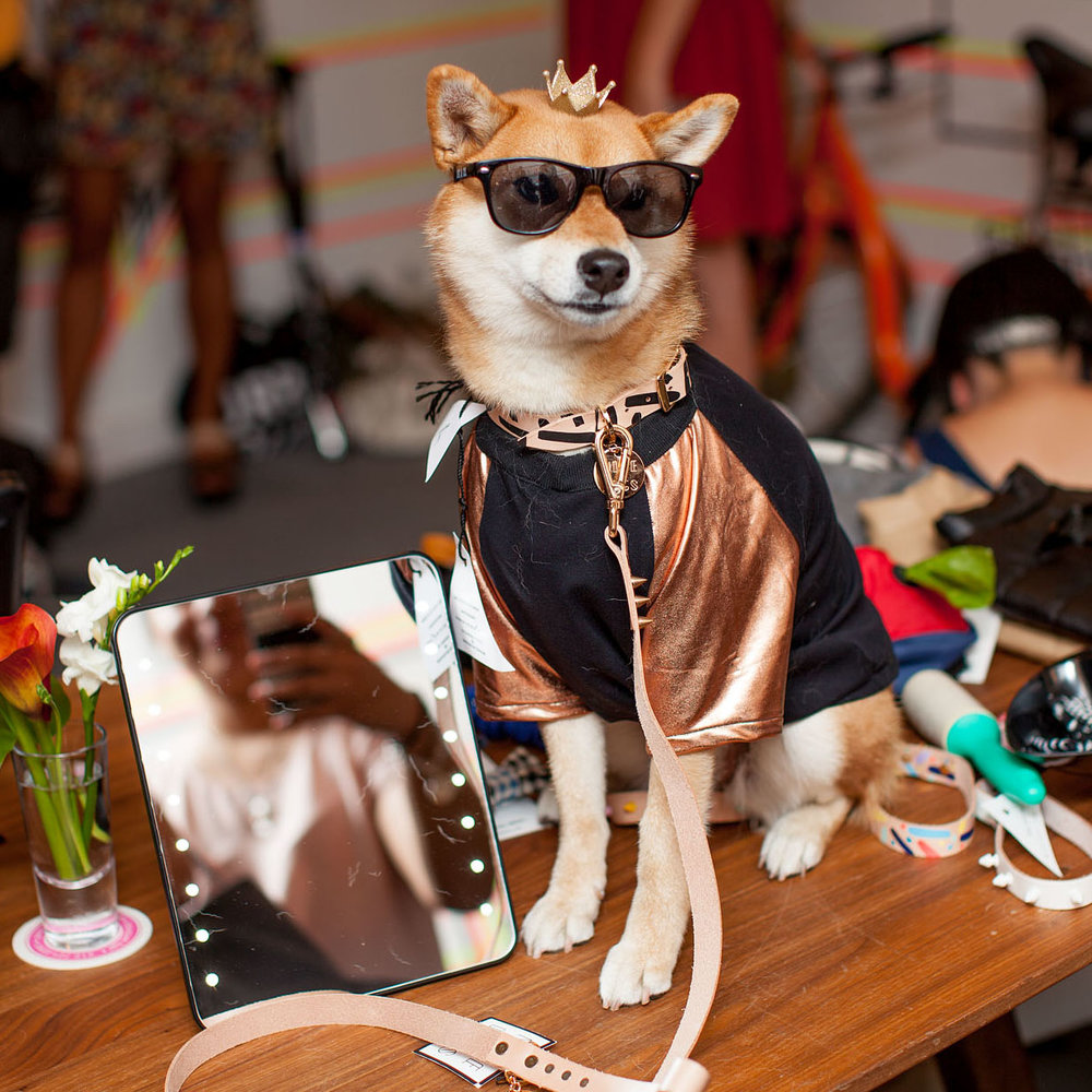 DOG & CO. ((Four-Legged)) Fashion Week RUNWAY EVENT