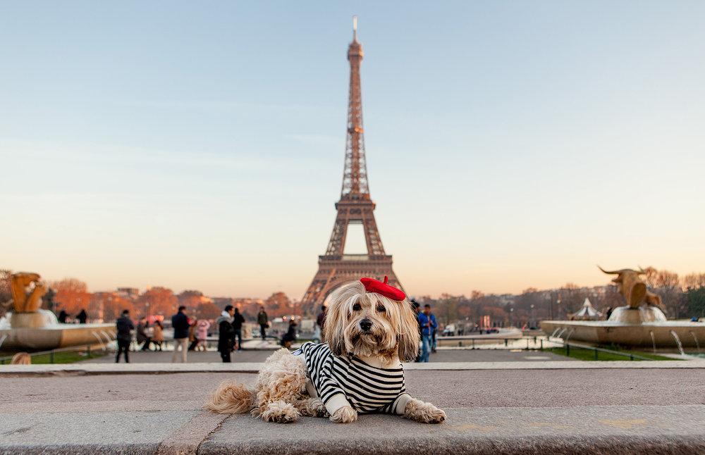 Cheeky Takes Paris