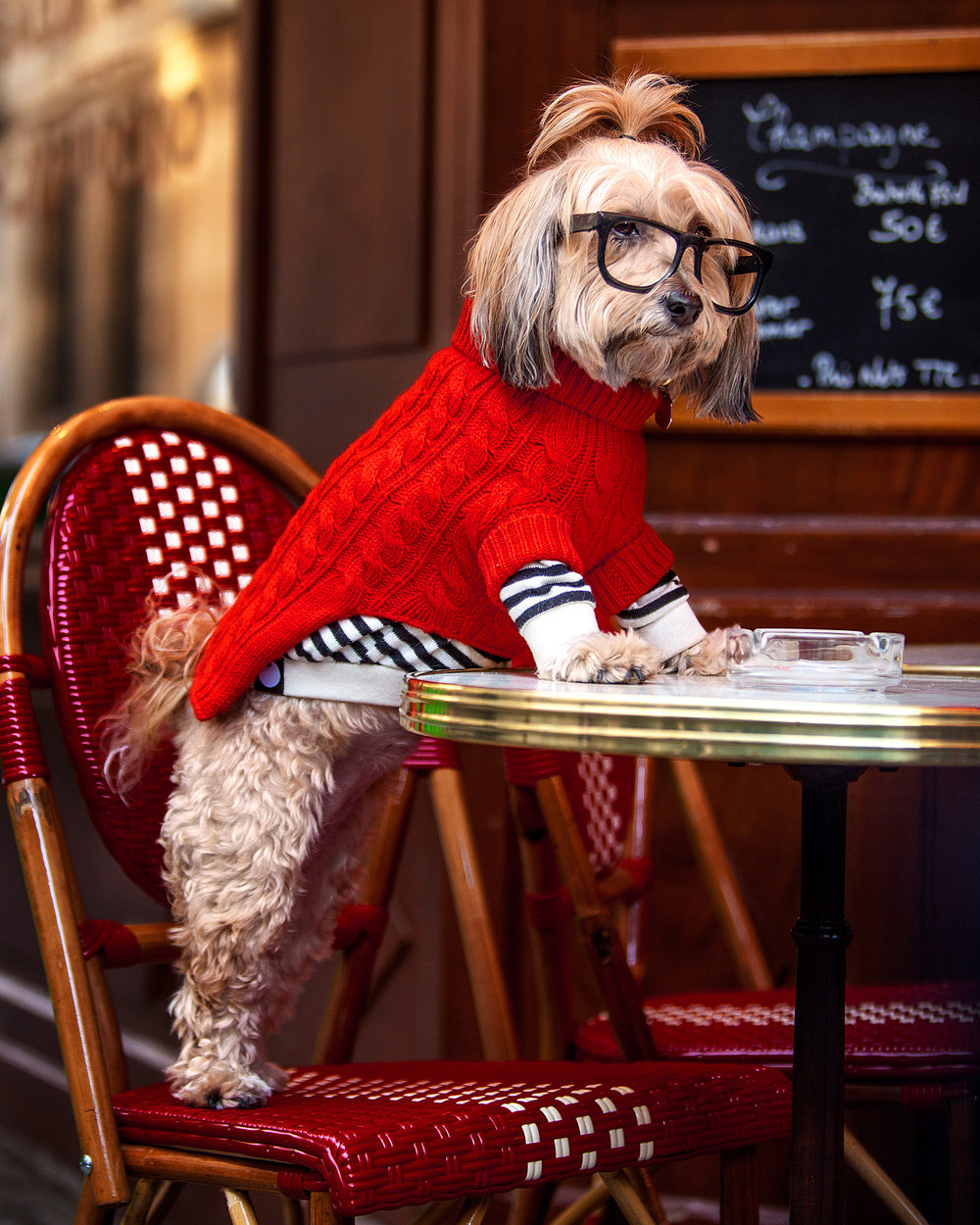 RUBY RUFUS | Kora Cable Knit  +  DOG & CO. | Cheeky Stripe Pullover