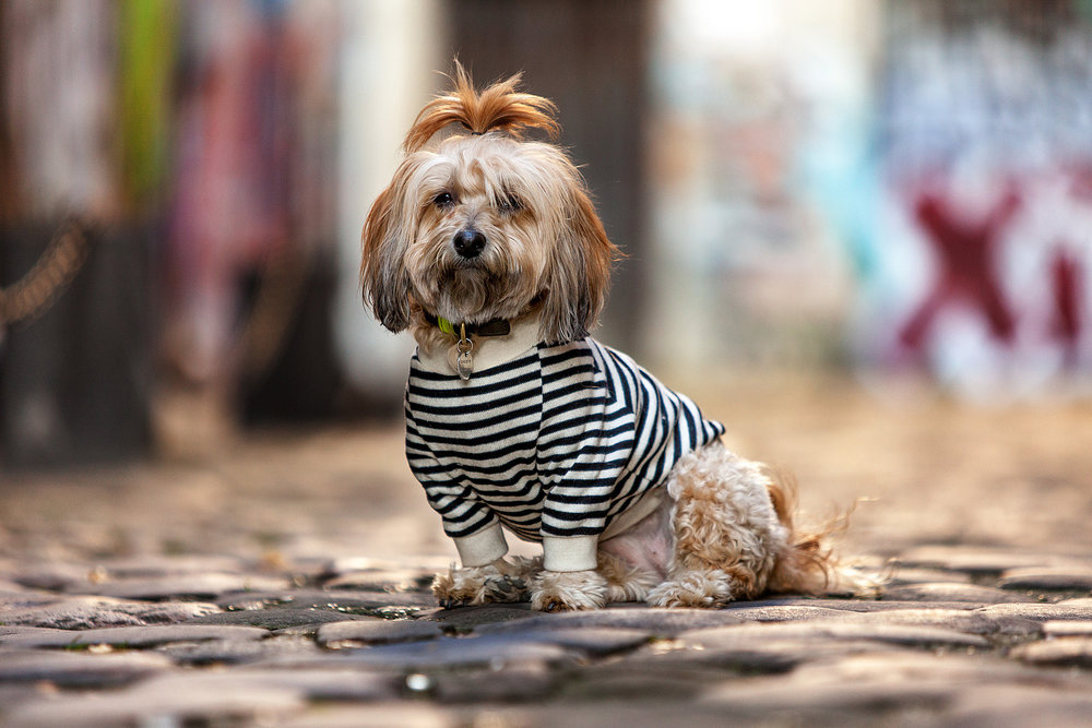 DOG & CO. | Cheeky Stripe Pullover