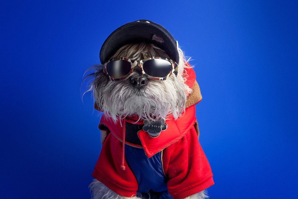 The Barking Bachelorette | Shaggy