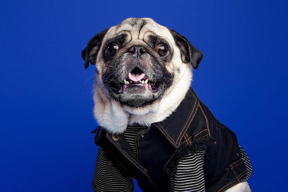 The Barking Bachelorette | Boogie