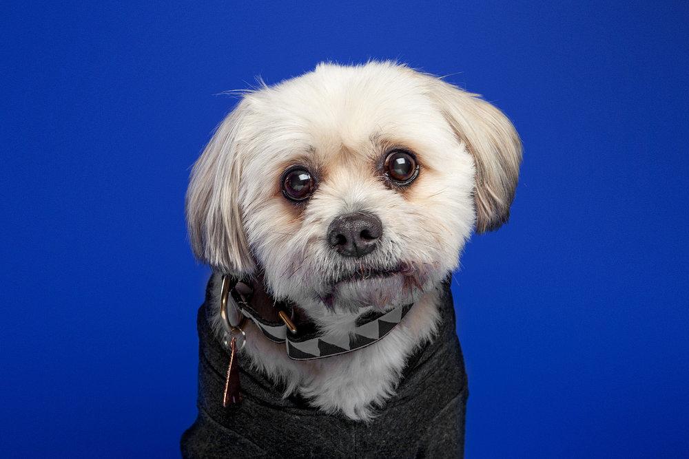 The Barking Bachelorette | Buster