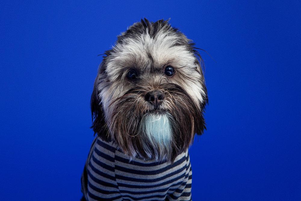 The Barking Bachelorette | Ron Pablo