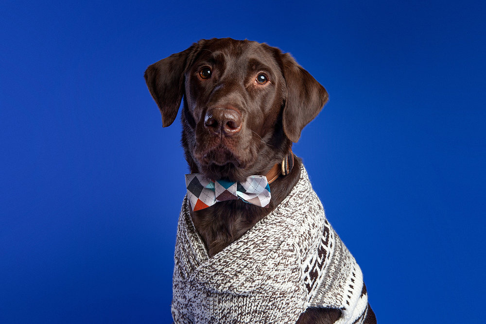The Barking Bachelorette | Harvey
