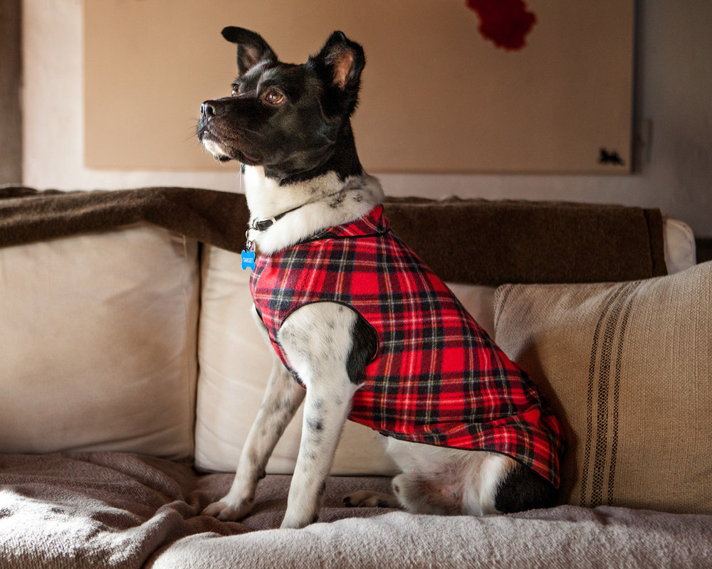 TARGET in the GOLD PAW | Fleece in Red Plaid