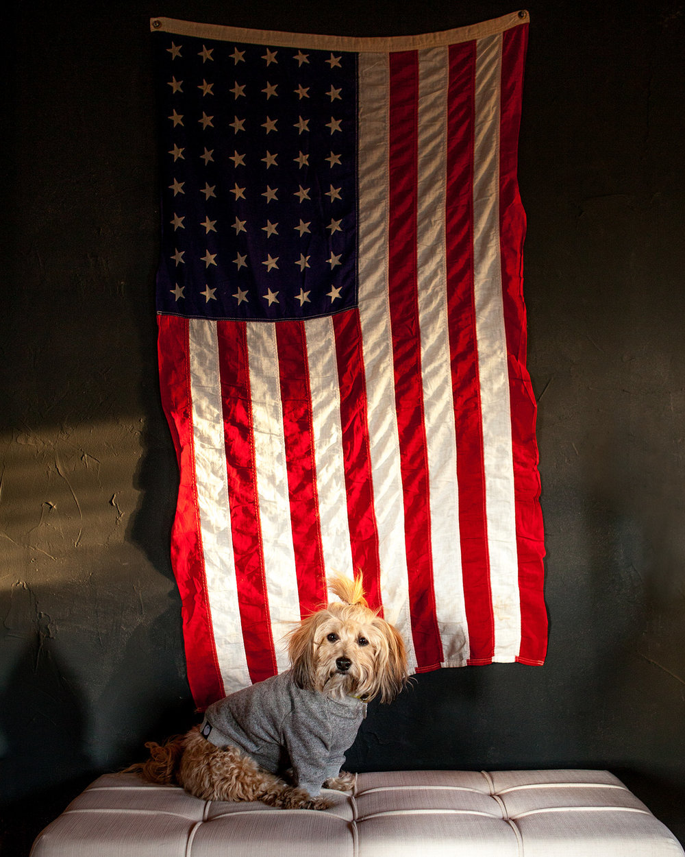 DOG & CO. | Crew Neck Sweatshirts (Back in Stock Soon!)