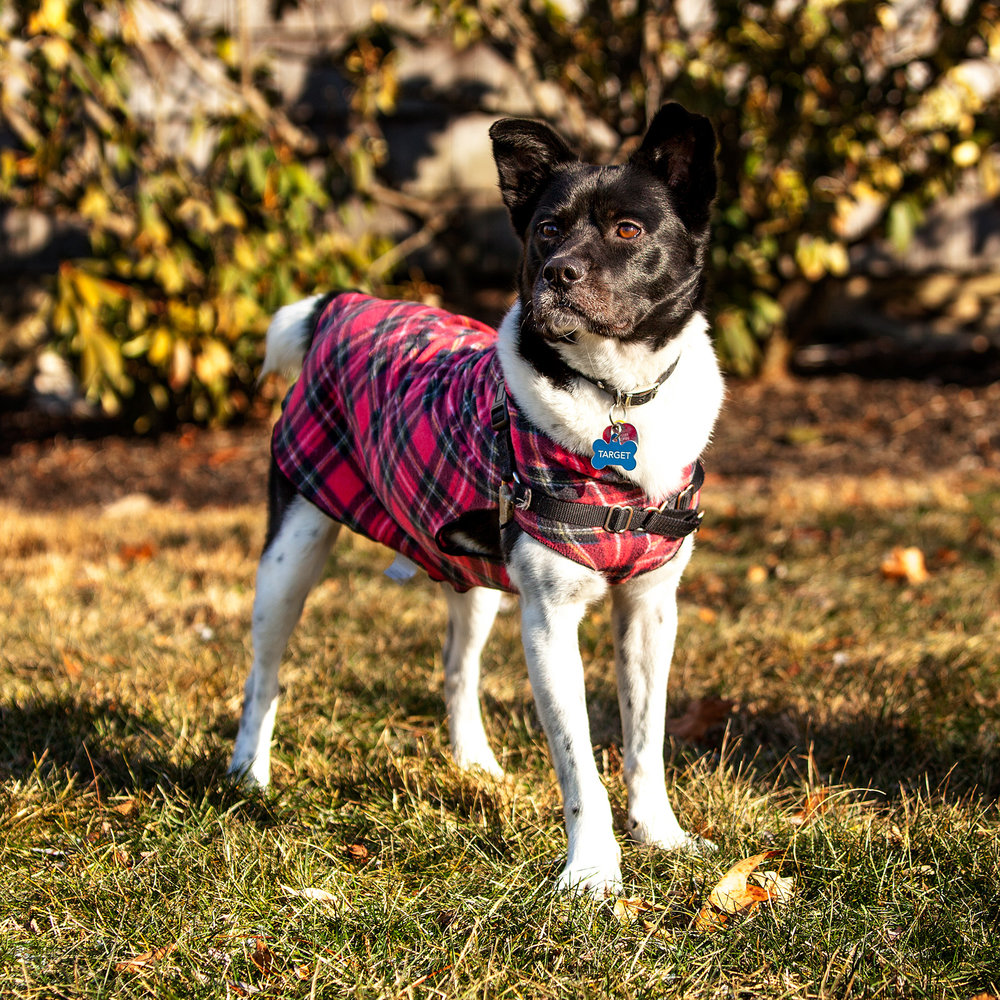 Target in the GOLD PAW | Stretch Fleece in Red Plaid