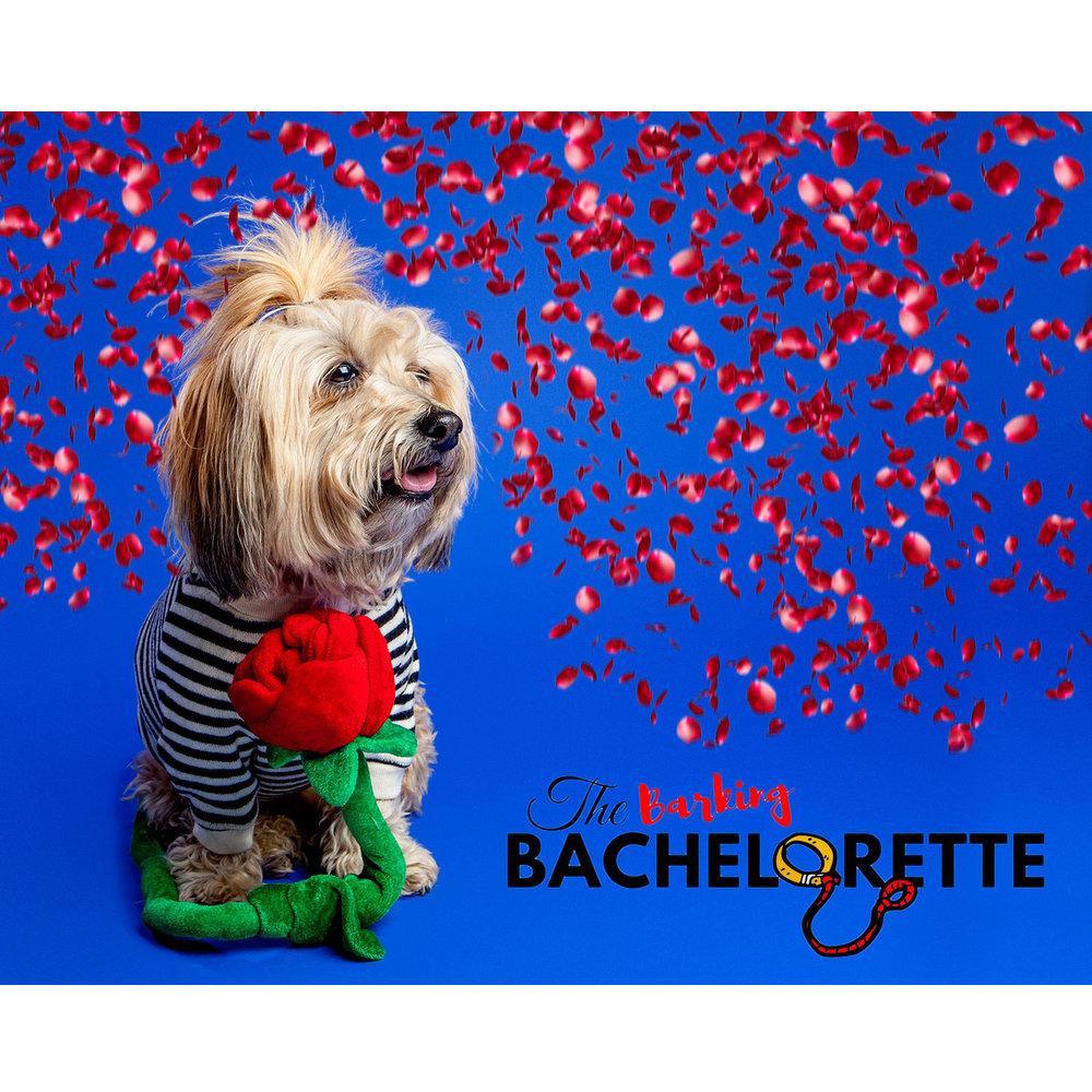 The Barking Bachelorette