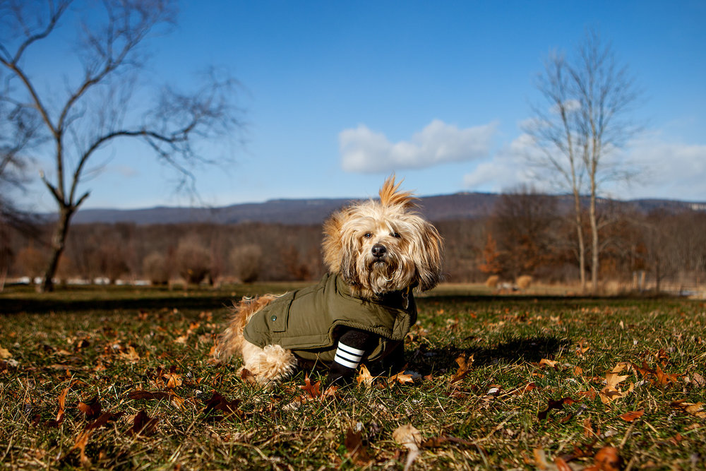 FAB DOG | Snorkel Parka (hood is removable)