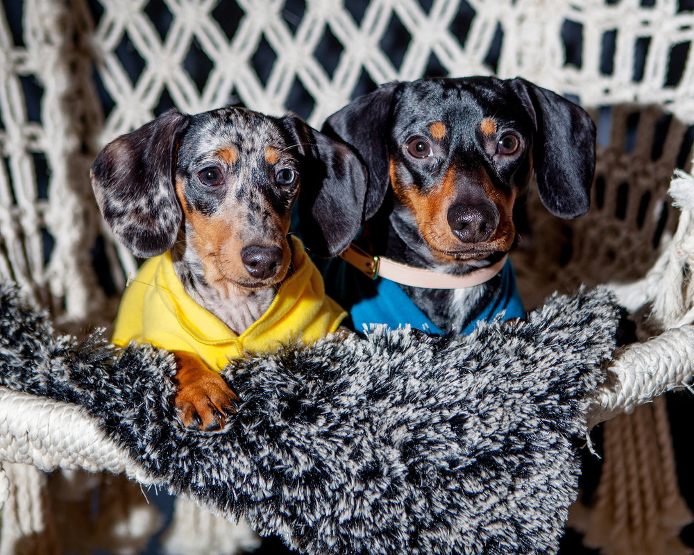 ZEEK in the GOLD PAW Fleece in Marine Blue (right)