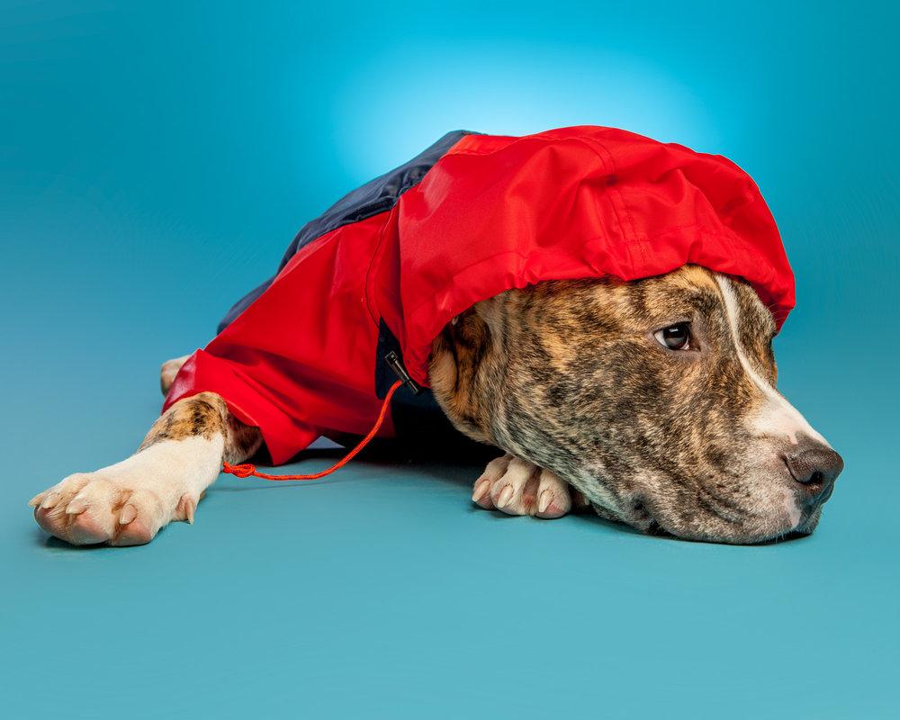 WAGWEAR | Rain Breaker + FOUND MY ANIMAL | Adjustable Leash