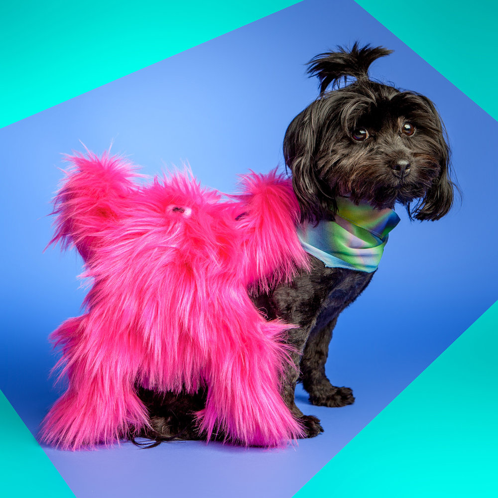WEST PAW | Boogie in Hot Pink