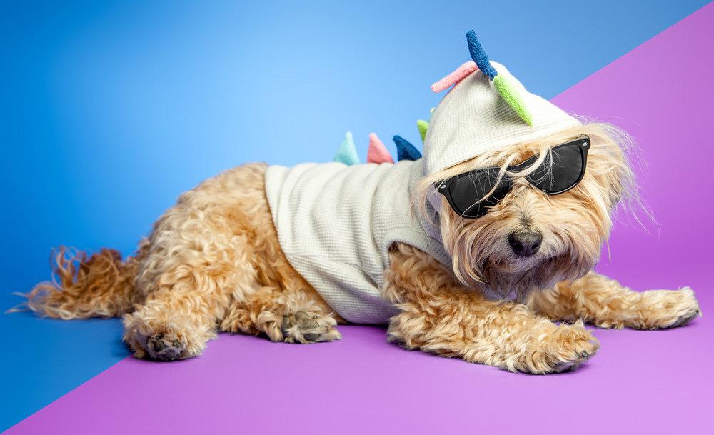 703 DOG | Dino Dog Hoodie