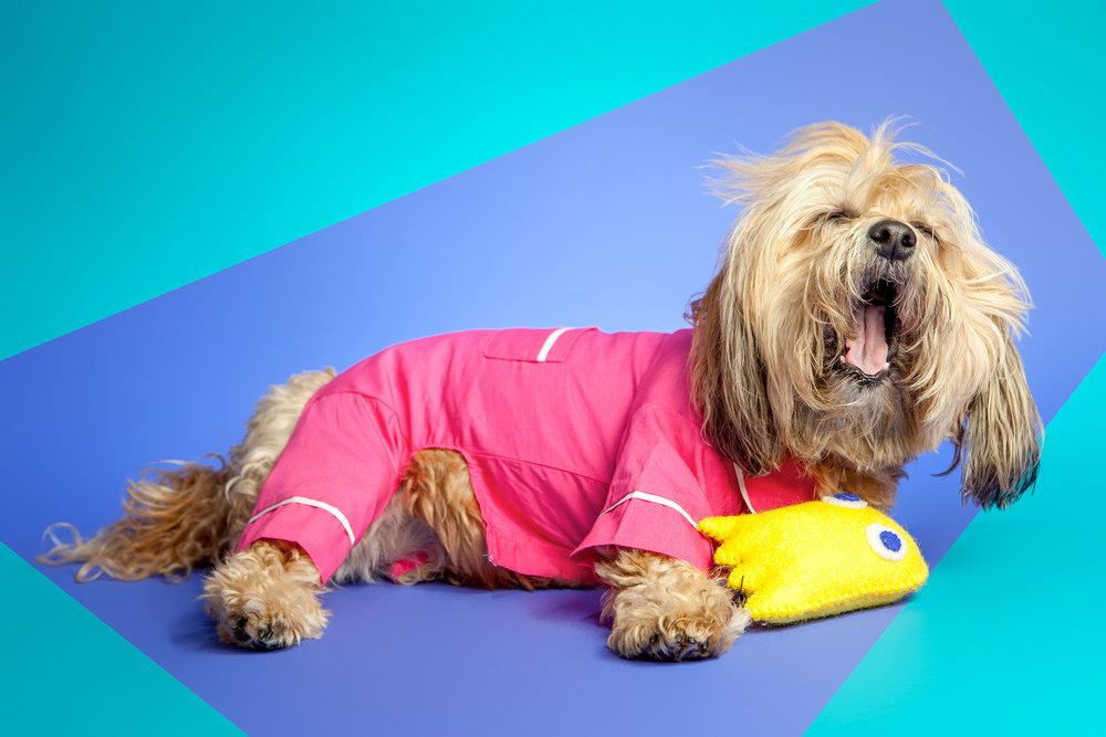 FAB DOG | Poplin PJ