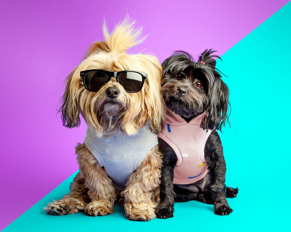 DOG & CO.   Summer Sisters.jpg