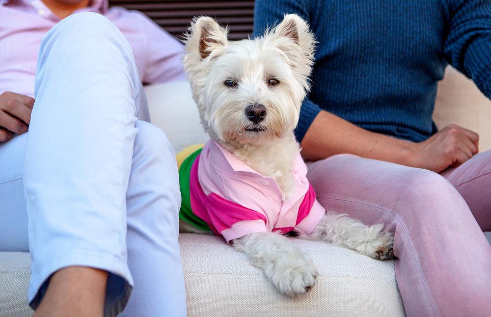 WORTHY DOG   Pique Polo + Floral Button-Down
