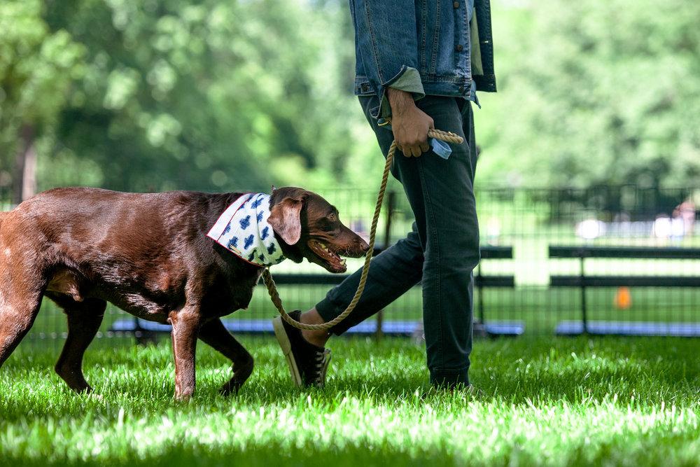 FOUND MY ANIMAL   Standard Leash in Rope + Denim, FOGGY DOG   Bandana