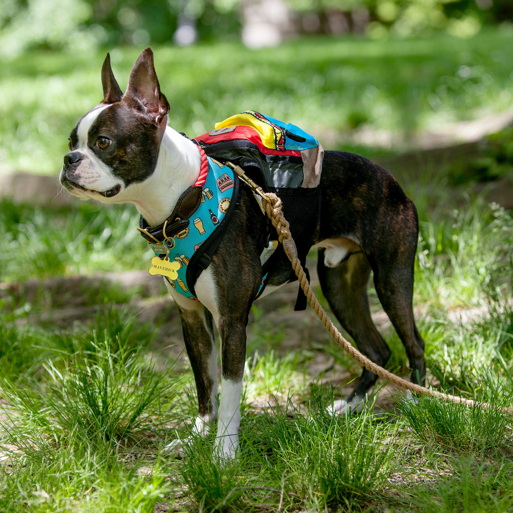 CHARLIE'S BACKYARD   Backpack, MOO + TWIG   Reversible Harness, + FOUND MY ANIMAL   Collar + Leads