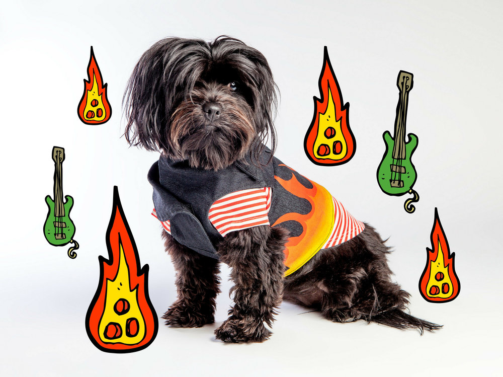 EYE OF DOG | Flames Vest Harness + DOG & CO. | Perfect T