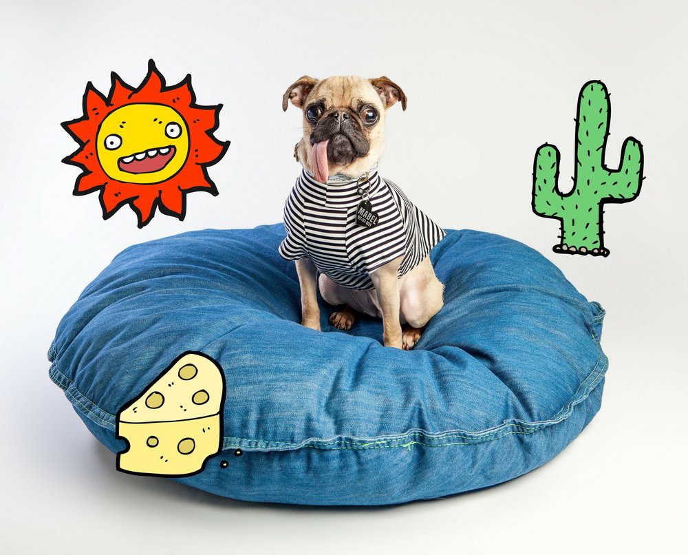 DEN DOG BEDS | Dog Bed in Whistle Blue + DOG & CO. | Perfect T