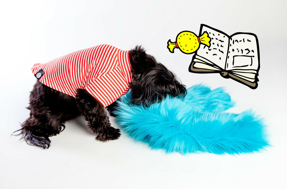 WEST PAW | Salsa in Turquoise + DOG & CO. | Perfect T