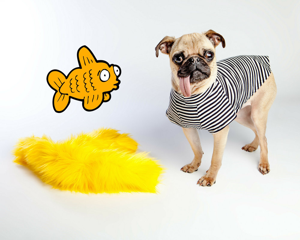 WEST PAW | Salsa in Lemon + DOG & CO. | Perfect T