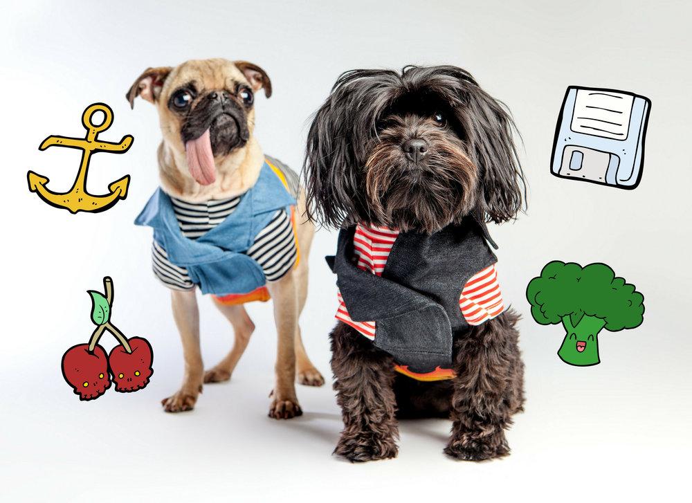 DOG & CO. | Yikes Stripes
