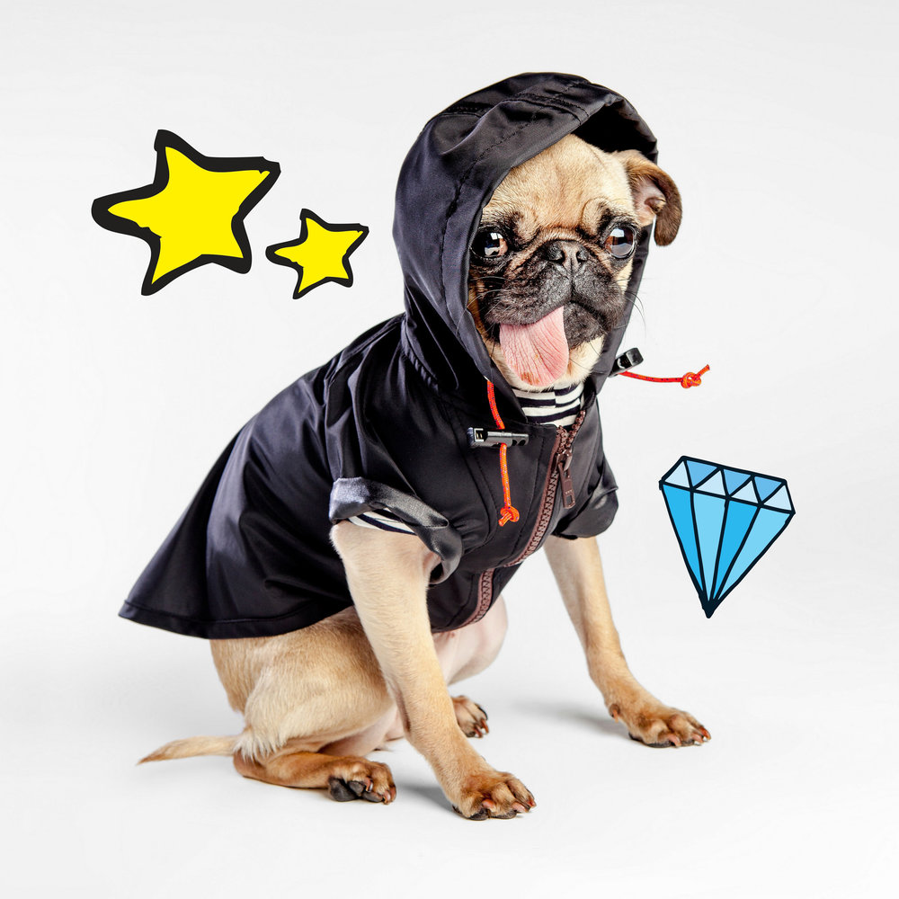 WAGWEAR | Rain Breaker in Black + DOG & CO. | Perfect T