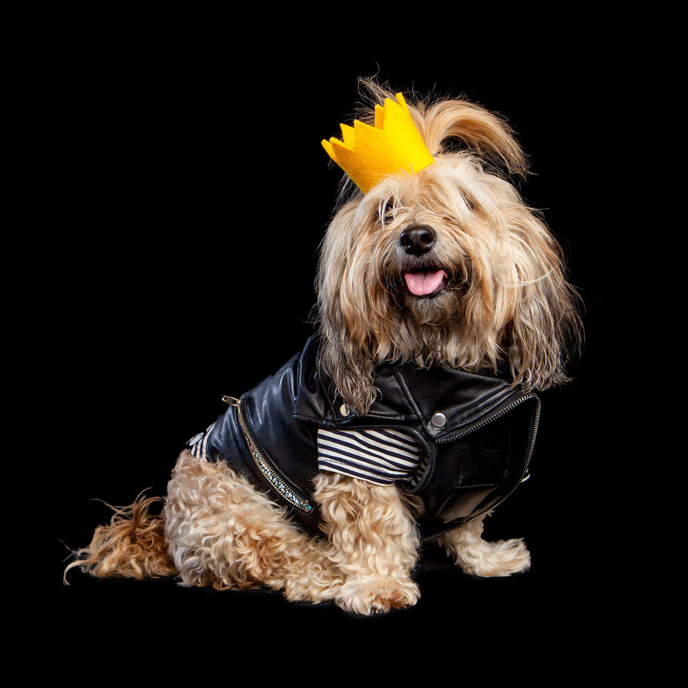 CHEEKY | Store Manager & Design Director at DOG & CO. (DOG & CO. | Perfect T + EYE OF DOG | Moto Vest +MODERN BEAST | Party Beast Crown)