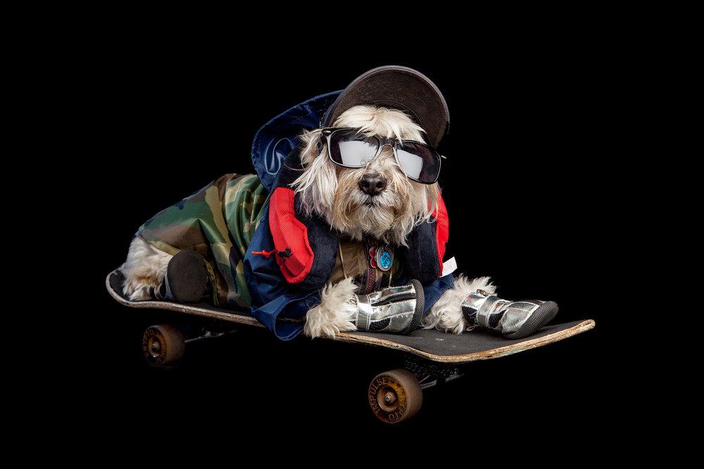 SHAGGY | Skateboarder extraordinaire (WAGWEAR | Rain Breaker + PLAY | Headphones Toy)