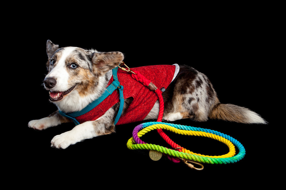 MALYGOS | Inspiration behind MALZ PALZ (FOUND MY ANIMAL | Rainbow Lead, Cotton Harness + LONG DOG | Hoodie (harness + hoodie available in-store)