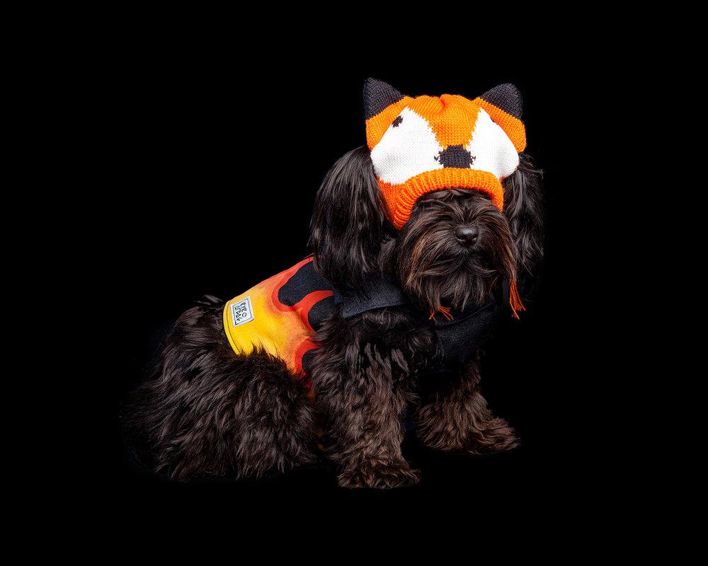 MARMALADY JONES| DOG & CO. Shop Intern (WORTHY DOG | Fox Hat + EYE OF DOG | Flames Vest)