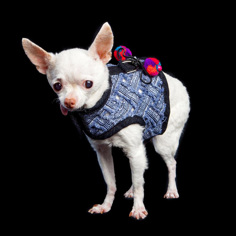 PINKY | Super senior rescue! (DOG IN THE CLOSET | Venice Vest)
