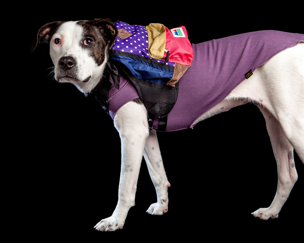 GNOCCI | Newly adopted from PupStarz Rescue! (GOLD PAW | Santa Fe in Violet + CHARLIE'S BACKYARD | Backpack)