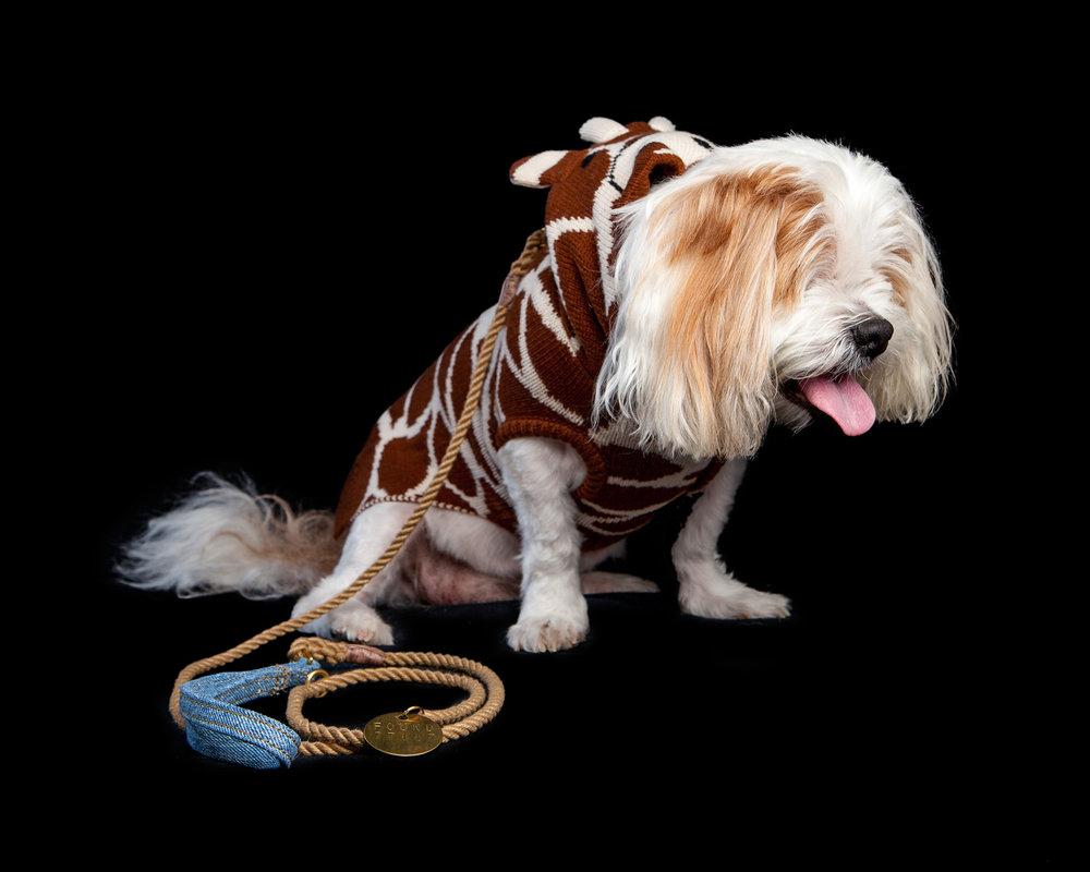 ANDREW | Blind + Deaf Super Senior Rescue (WORTHY DOG | Giraffe Hoodie + FOUND MY ANIMAL | Rope Lead)