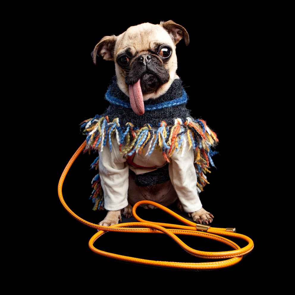 MABEL | DOG & CO. Store Greeter (in the LA CINOPELCA | Harness + Lead)