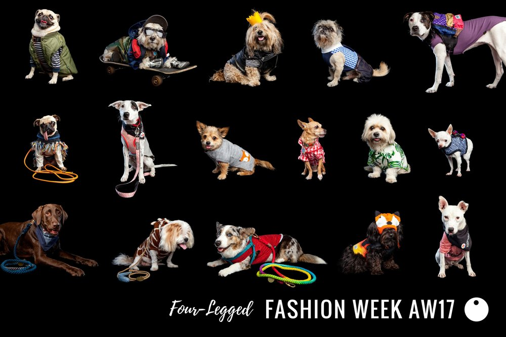 DOG & CO. | Four-Legged Fashion Week