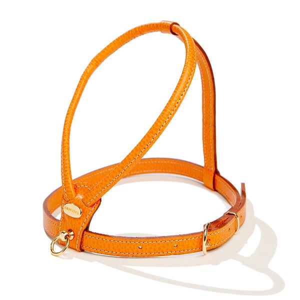 LA CINOPELCA |  Orange Harness.jpg