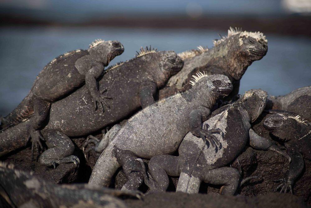 Galapagos_export-8.jpg